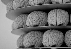 shelves of brains